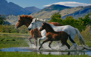 Horse Wallpaper High Definition