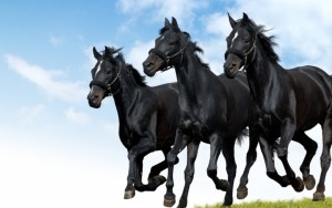 Horse Wallpaper Image Picture