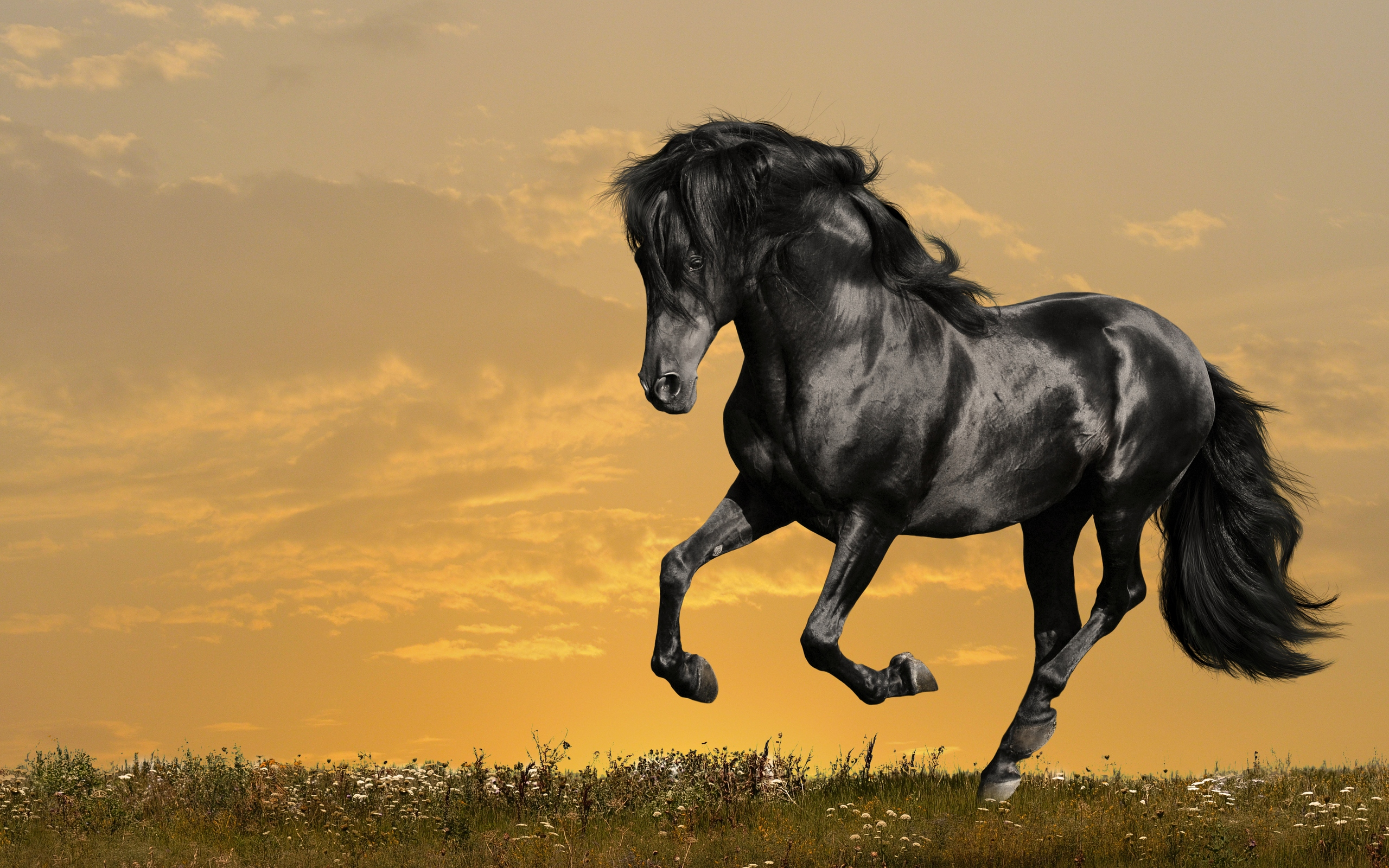 horse wallpapers for laptop -#main