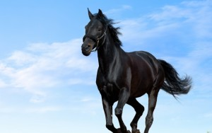 Horse Wallpaper Photos Amazing