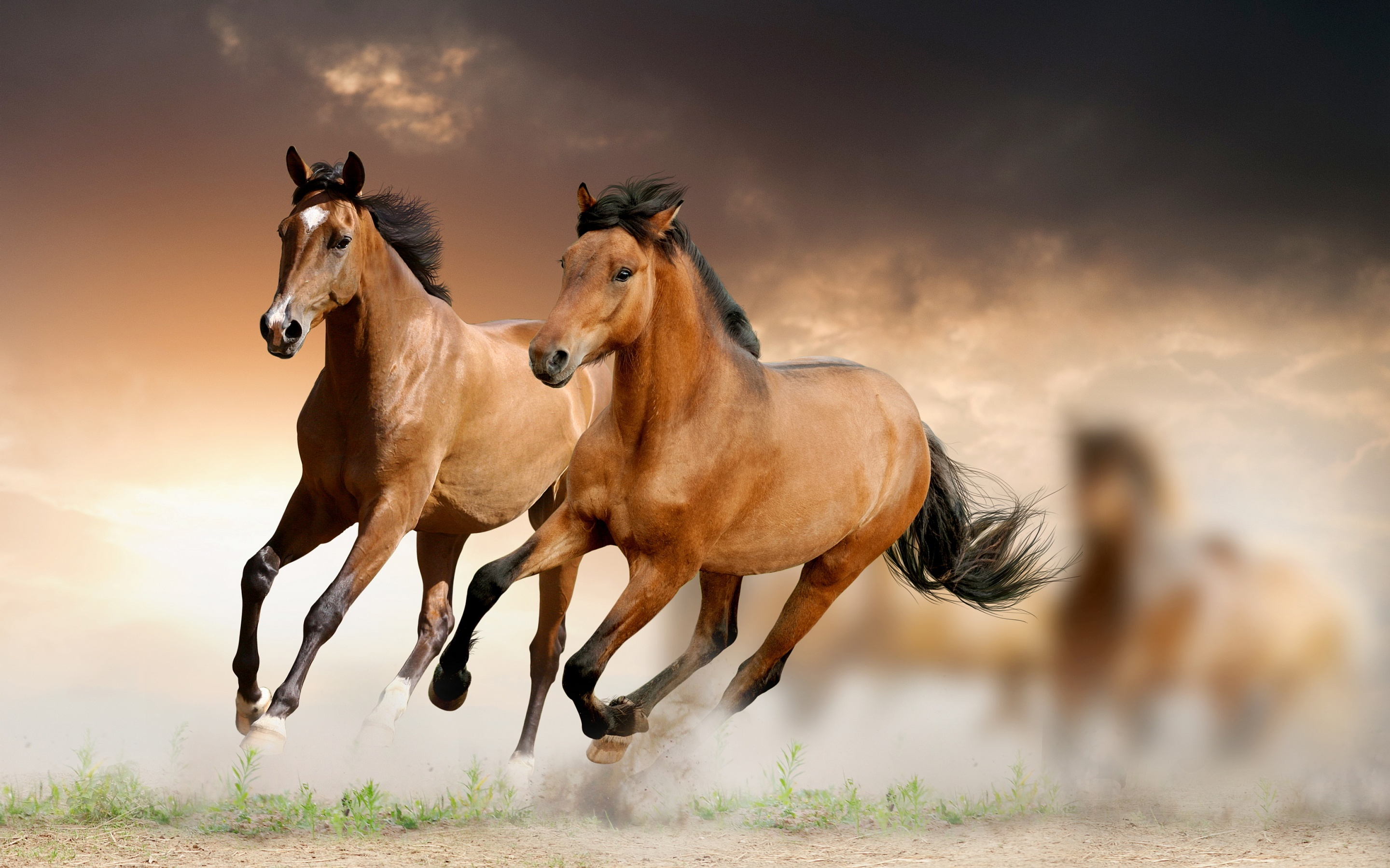 Horse Wallpaper Windows Downloads