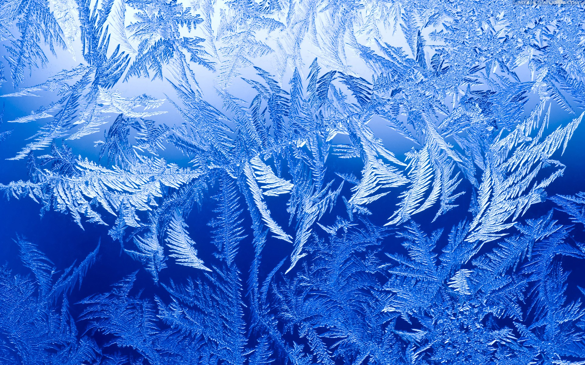 Ice Winter Wallpaper HD