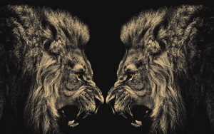 Lion Wallpaper Screensaver HD