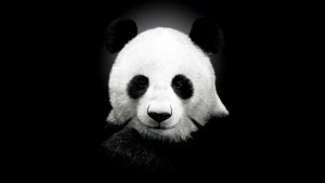 Panda 1920X1080 Wallpaper Computer