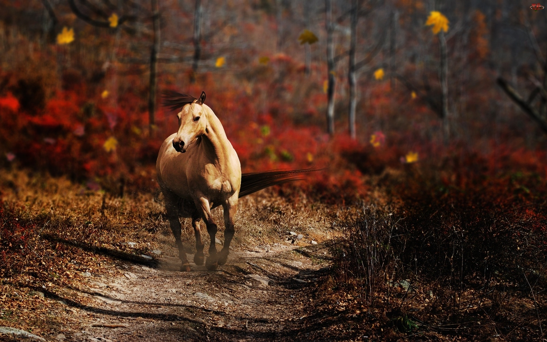 Running Horse Wallpaper 1920×1200