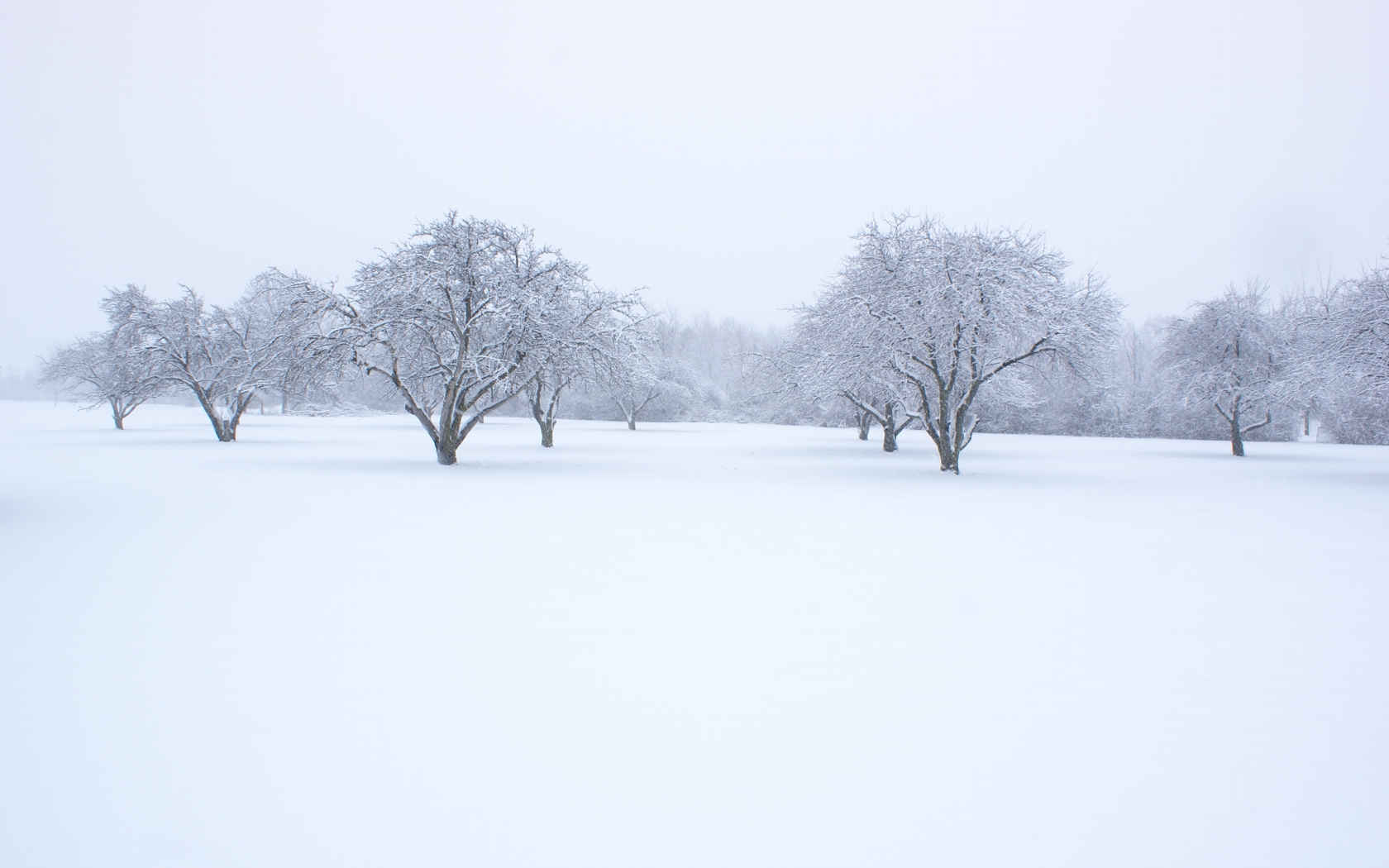 Snow Background Image Picture