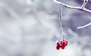 Snow Macro Photography Wallpaper