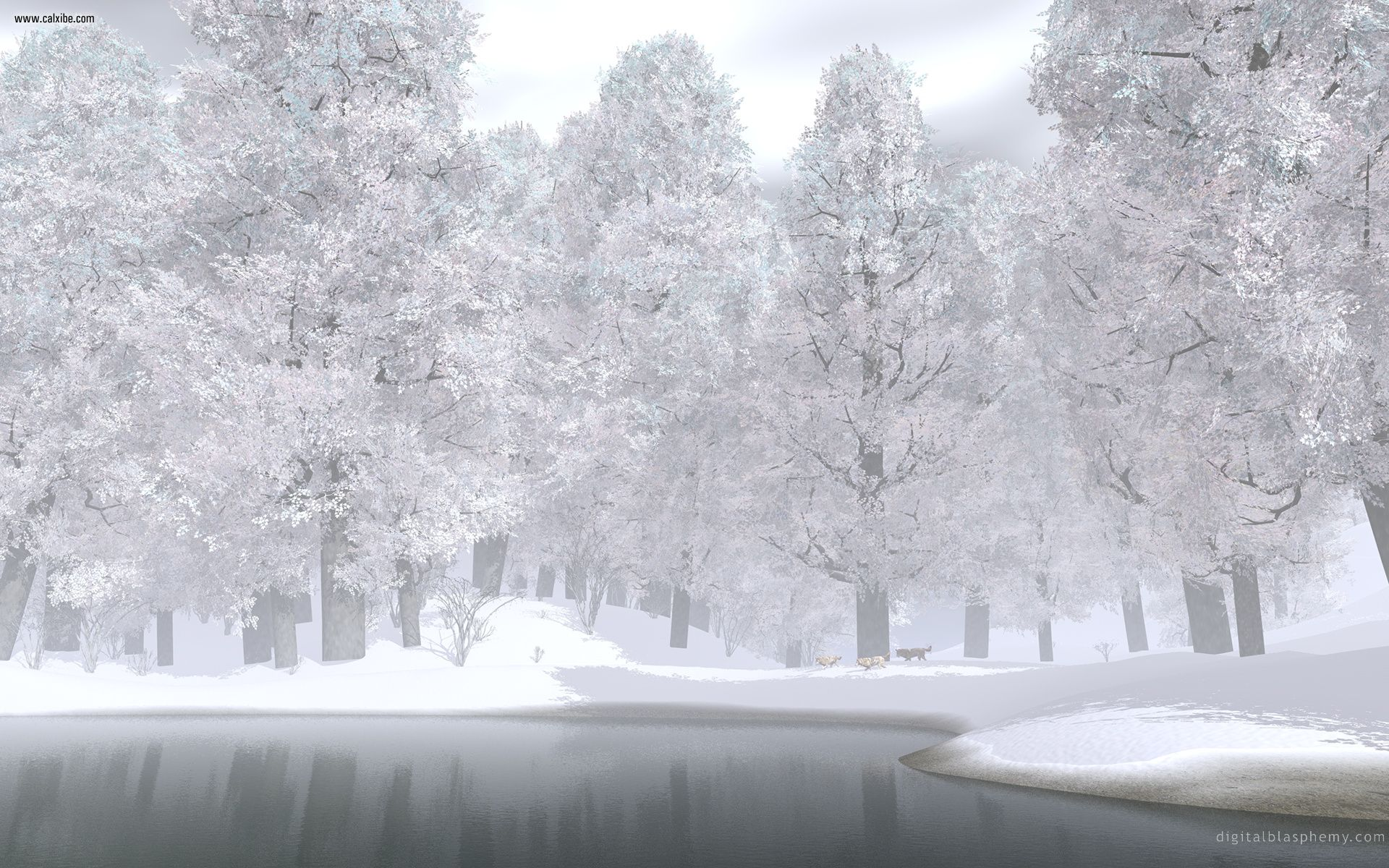 Snow Winter Wallpaper Photos HD