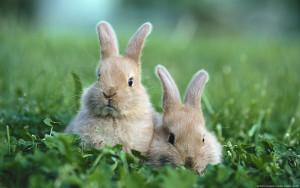 Baby Rabbit Wallpaper Cute
