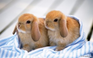 Bunnies Cute Wallpaper Iphone