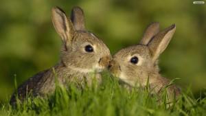 Bunnies Wallpaper Free Downloads