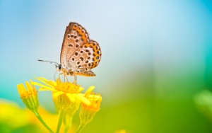 Butterfly Wallpaper Background High Definition