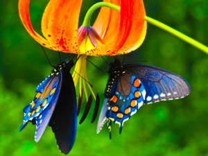 Butterfly Wallpaper Screensaver