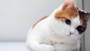 Cat Wallpaper Background High Definition