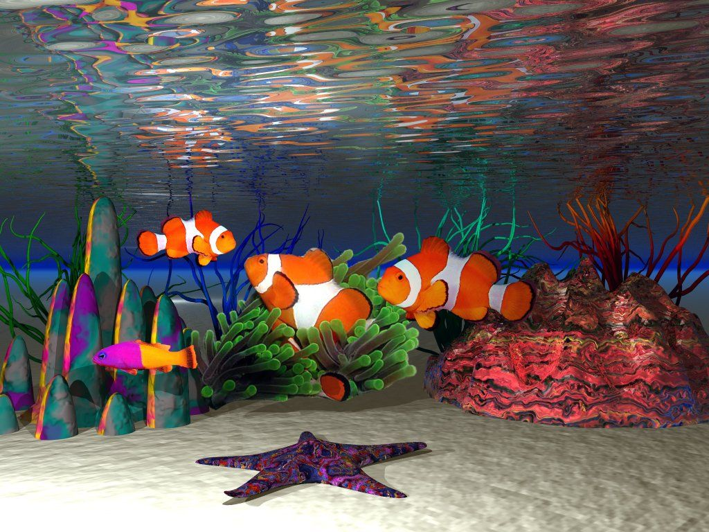 Clown Fish Wallpaper Widescreen