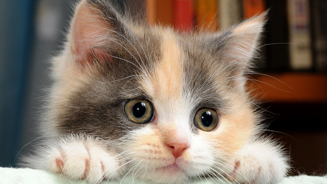 Cute Cats Wallpaper Funny