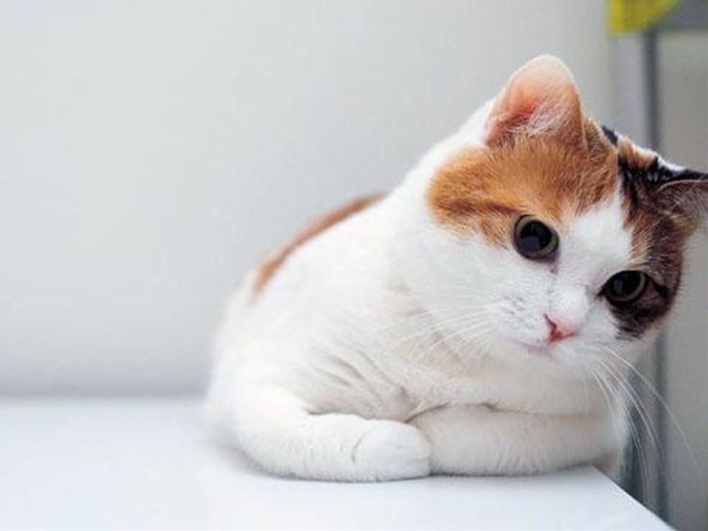 Cute Cats White Wallpaper