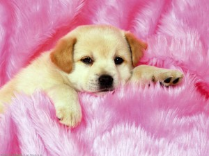 Cute Dog Wallpaper Little