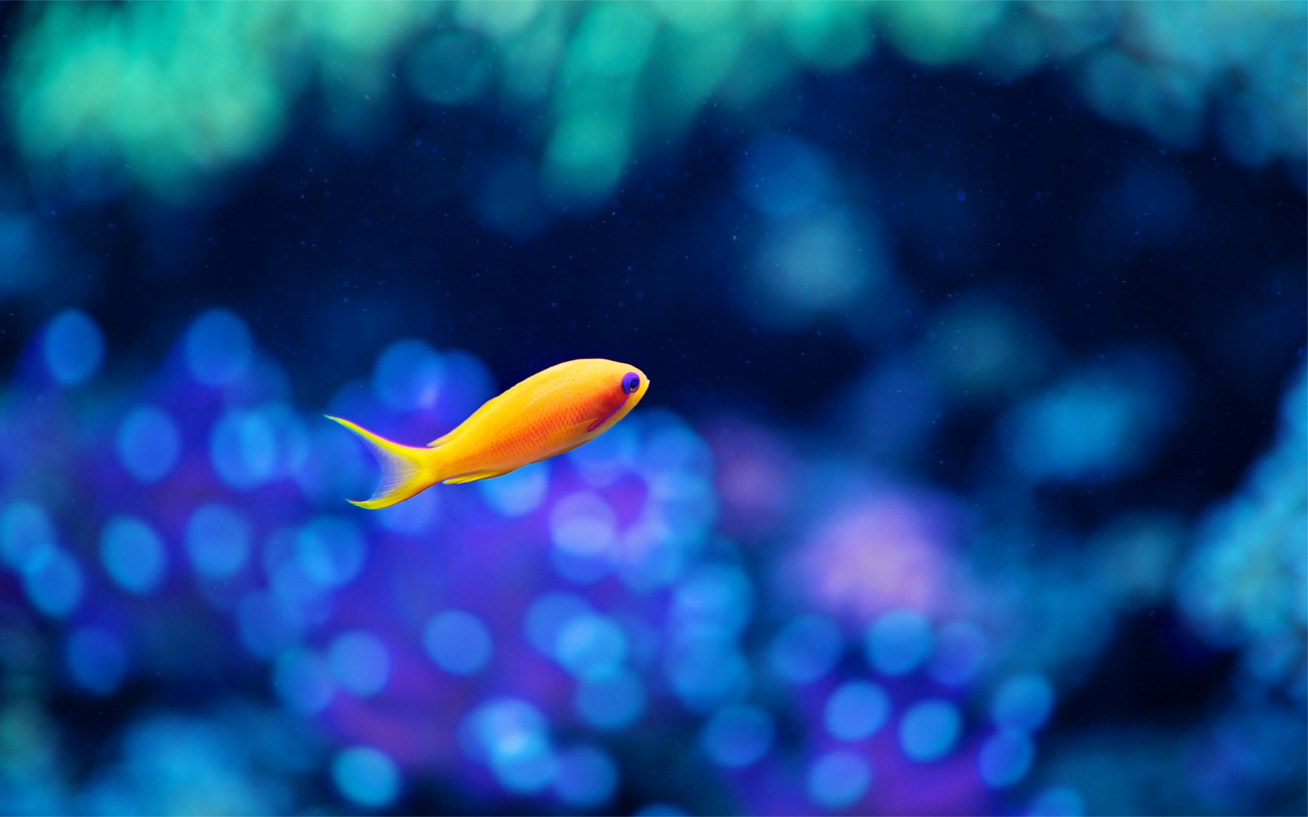 Cute Fish Wallpaper Yellow