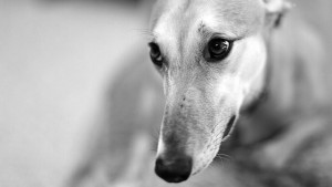 Dog Wallpaper Desktop Free Download
