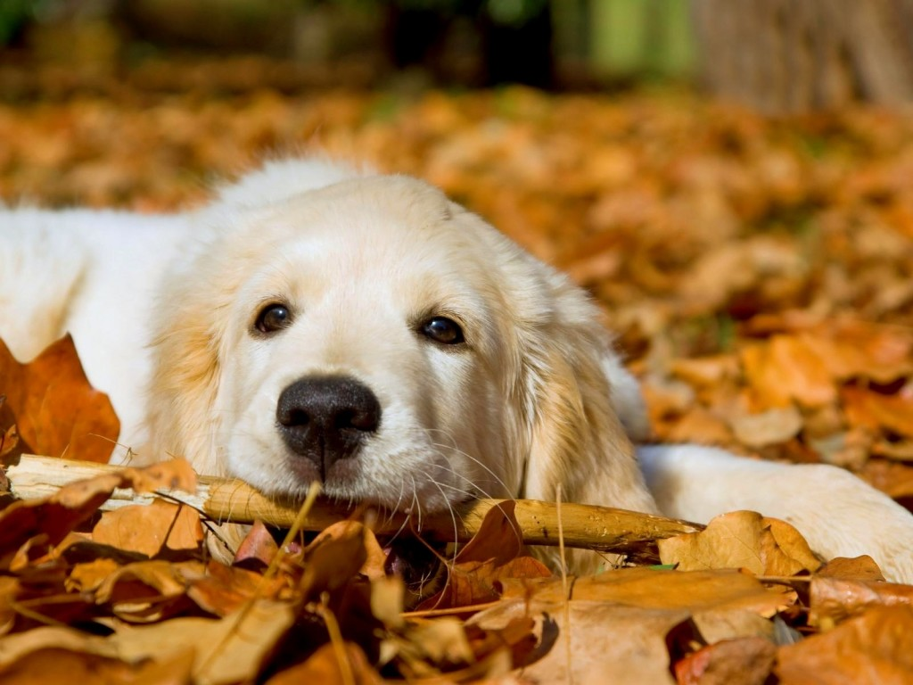 Simple Wallpaper High Resolution Dog - Dog-Wallpaper-High-Definition-1024x768  Perfect Image Reference_28143.jpg