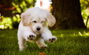 Dog Wallpaper Running Ball