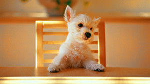 Dog Wallpaper White Free