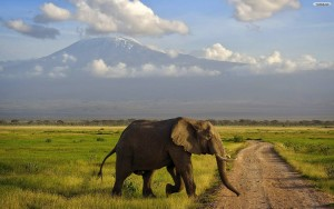 Elephant Landscape Wallpaper Beautiful