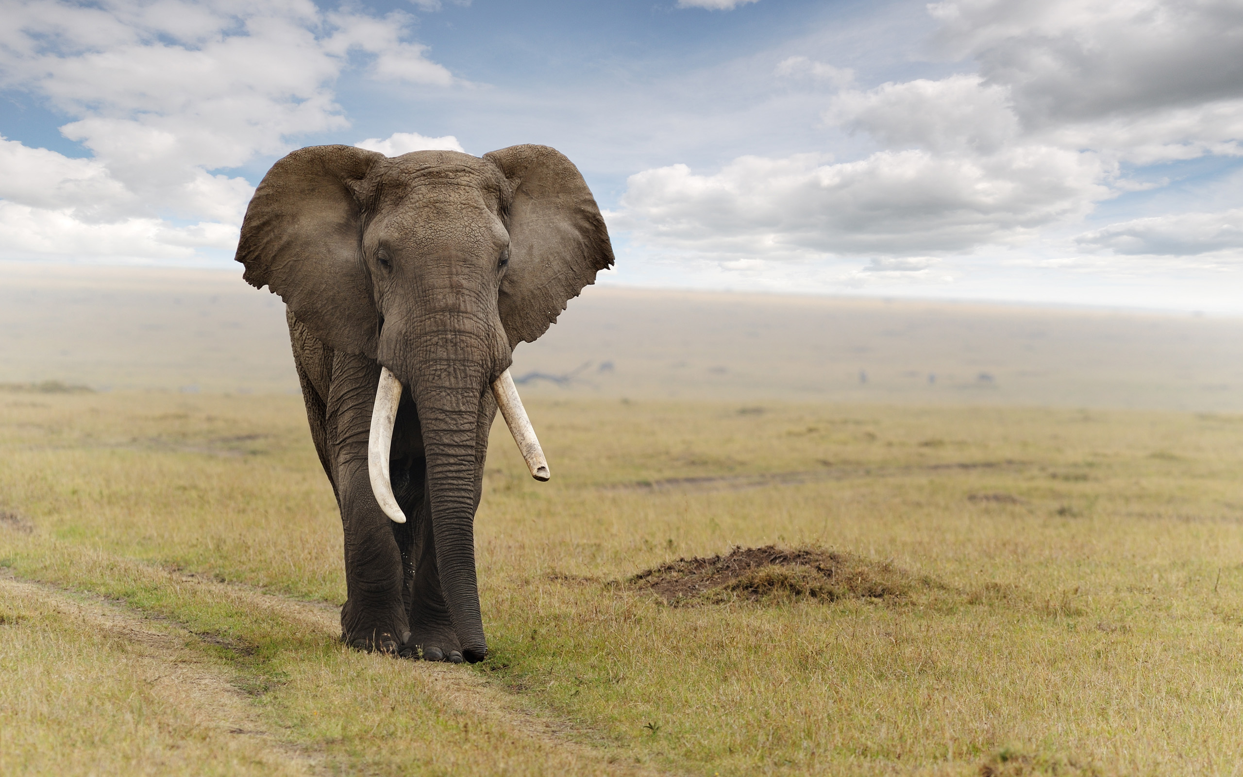 Elephant Wallpaper Free Downloads