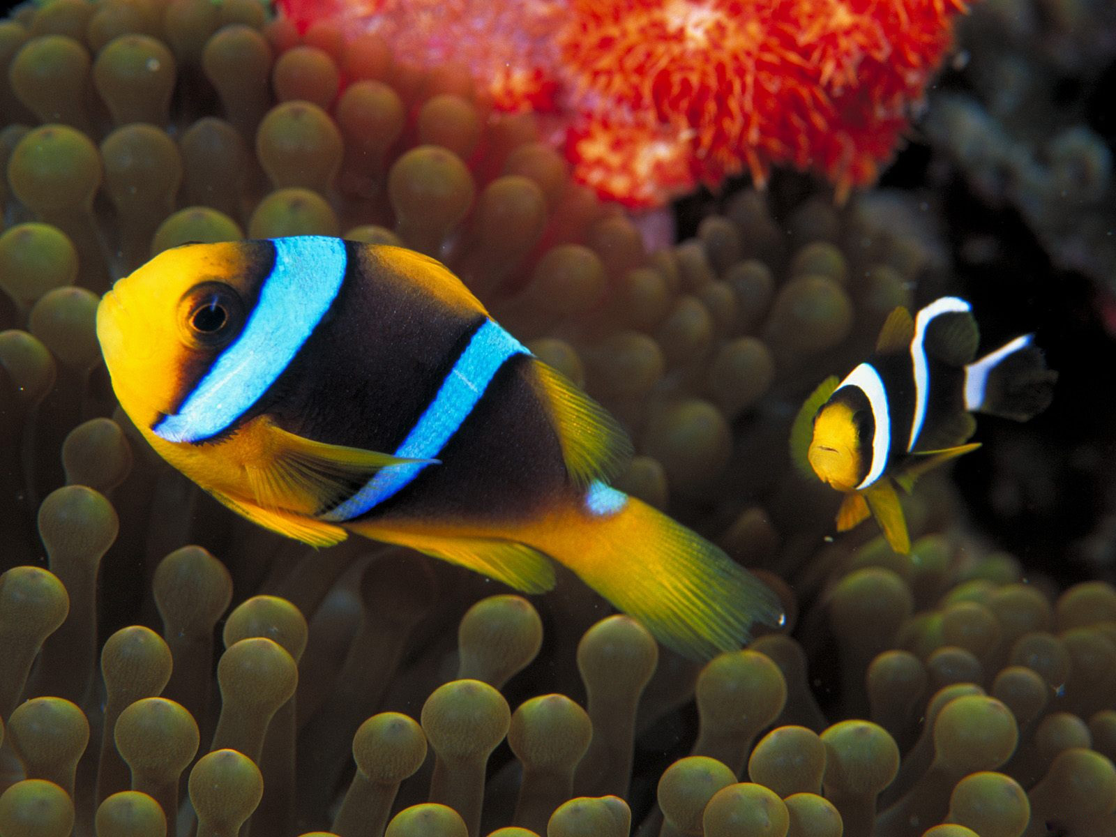 fish wallpapers best - photo #10