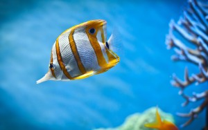 Fish Wallpaper High Definition