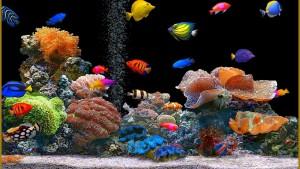 Fish Wallpaper Image Pics