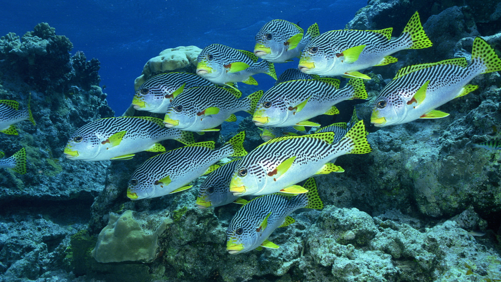 Fish Wallpaper Undersea
