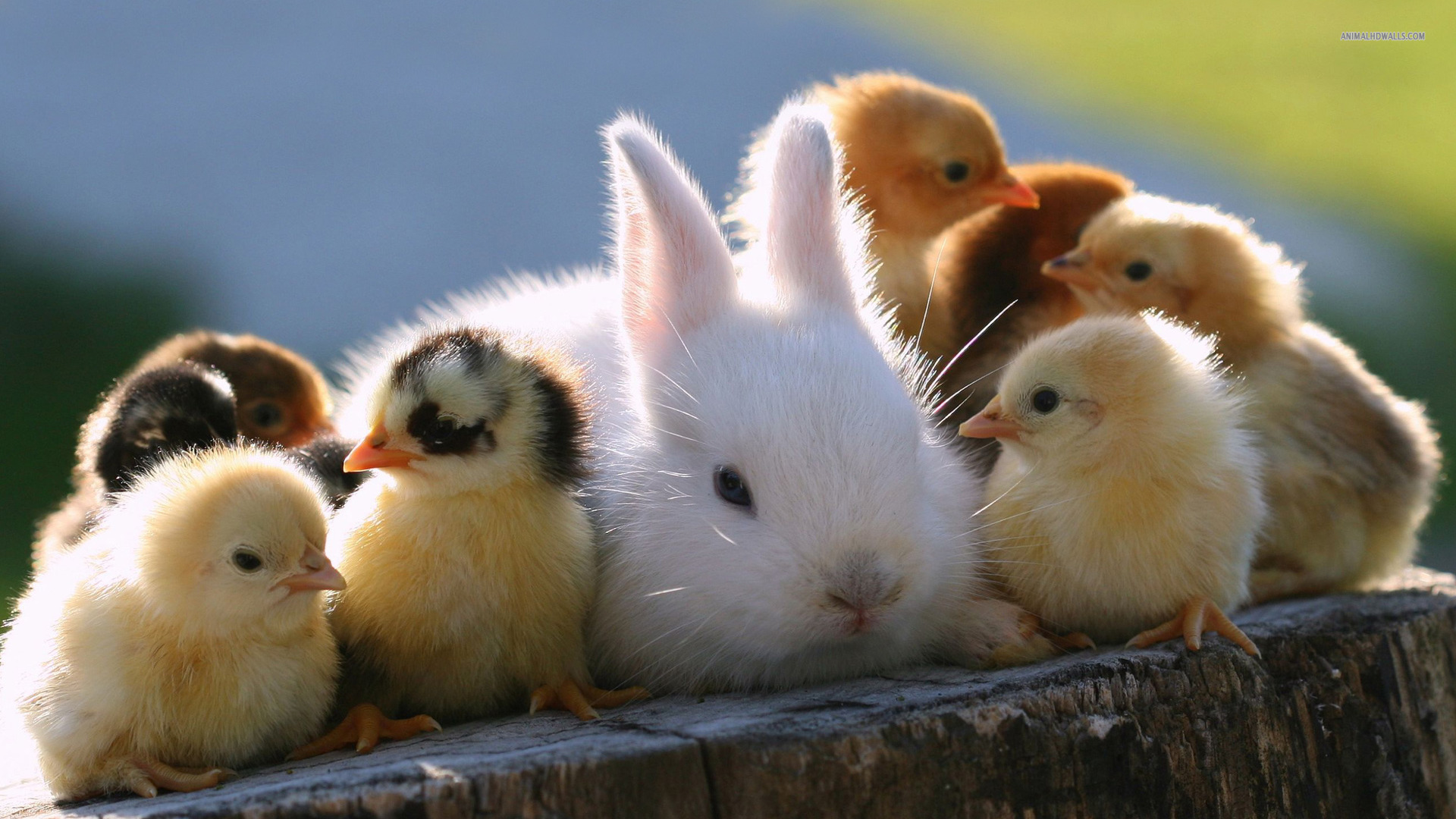 Fun Rabbit Animals Wallpaper Screensaver