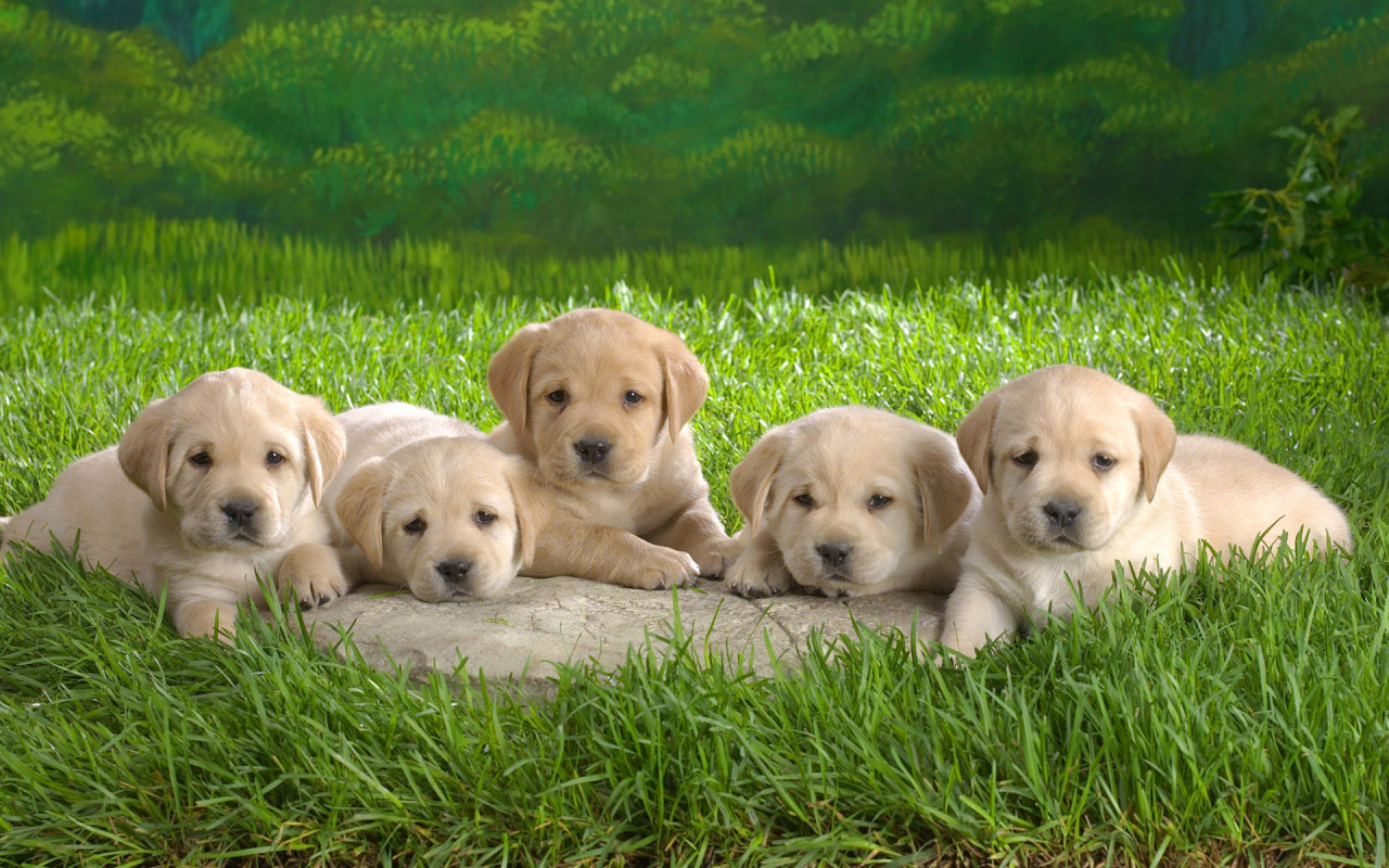 Funny Cute Puppies Wallpaper