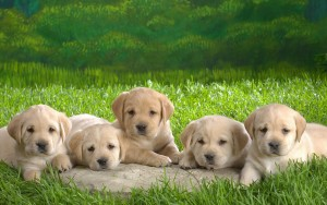 Lovely Dog Wallpaper 1920x1200