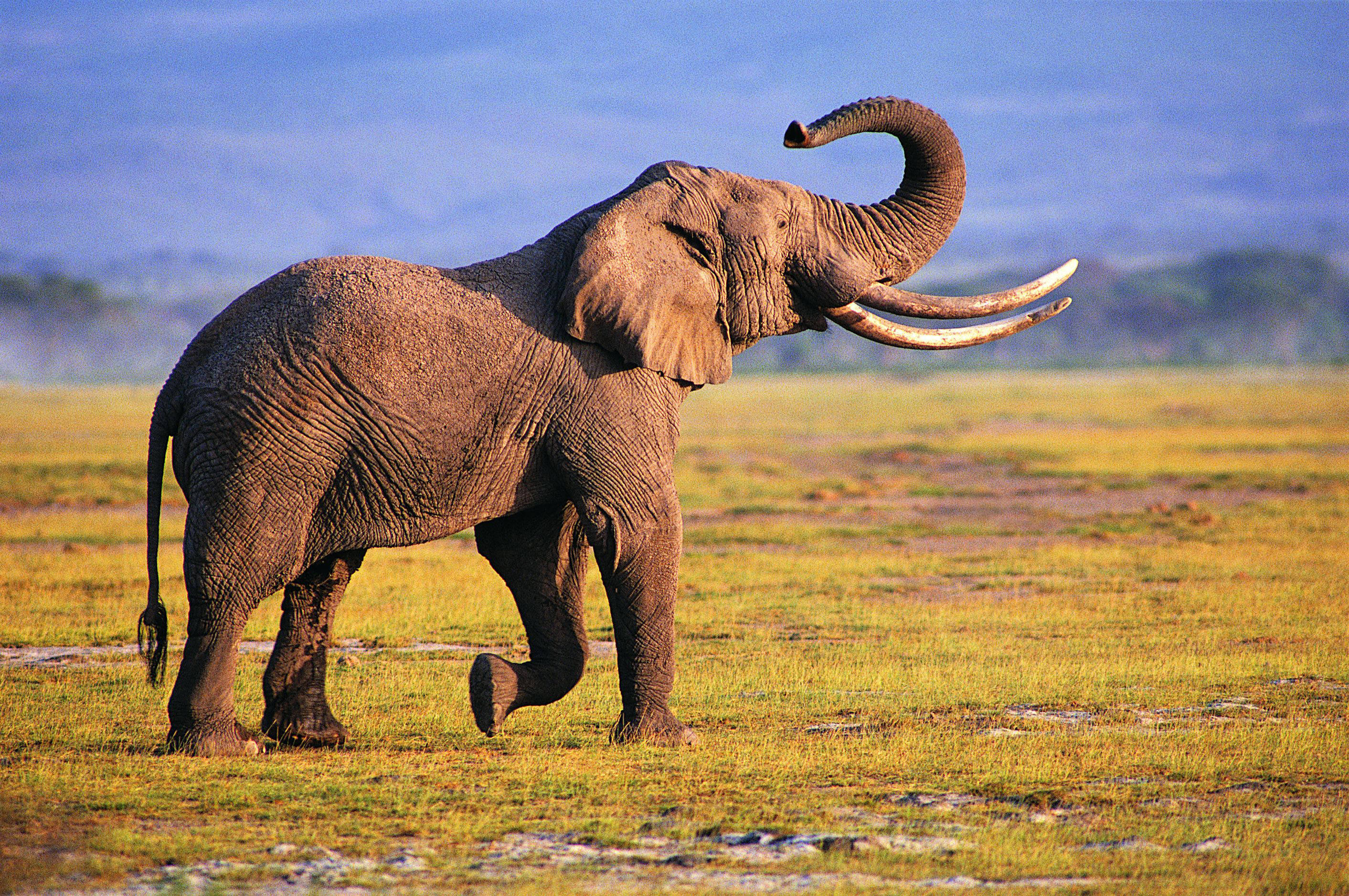 Photography Elephant Wallpapers