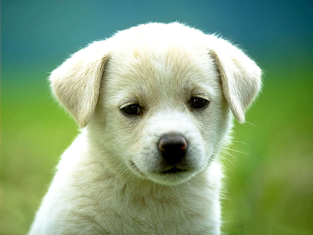 Puppies Dog Wallpaper Background
