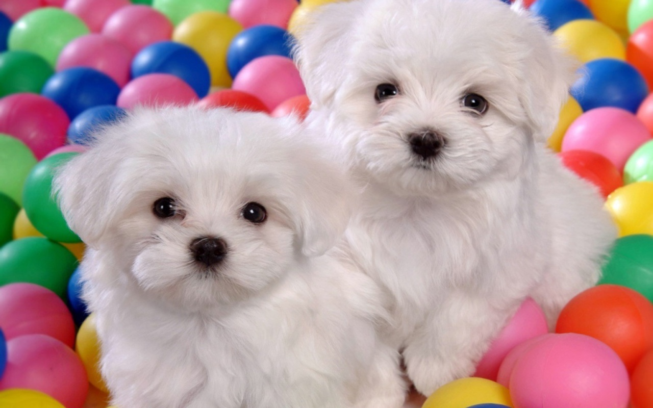 Puppies Dog Wallpaper Fullscreen Windows