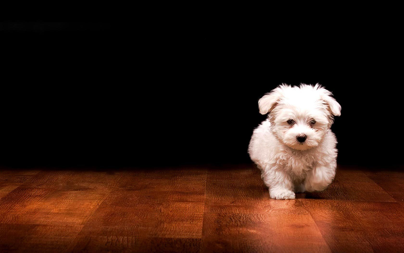 Puppy Dog Wallpaper
