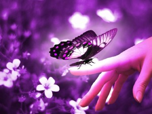 Purple Wallpaper Computer Butterfly