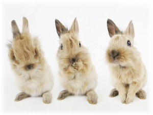 Rabbit Cute Funny Wallpaper Themes