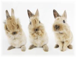Rabbit Cute Funny Wallpaper Themes