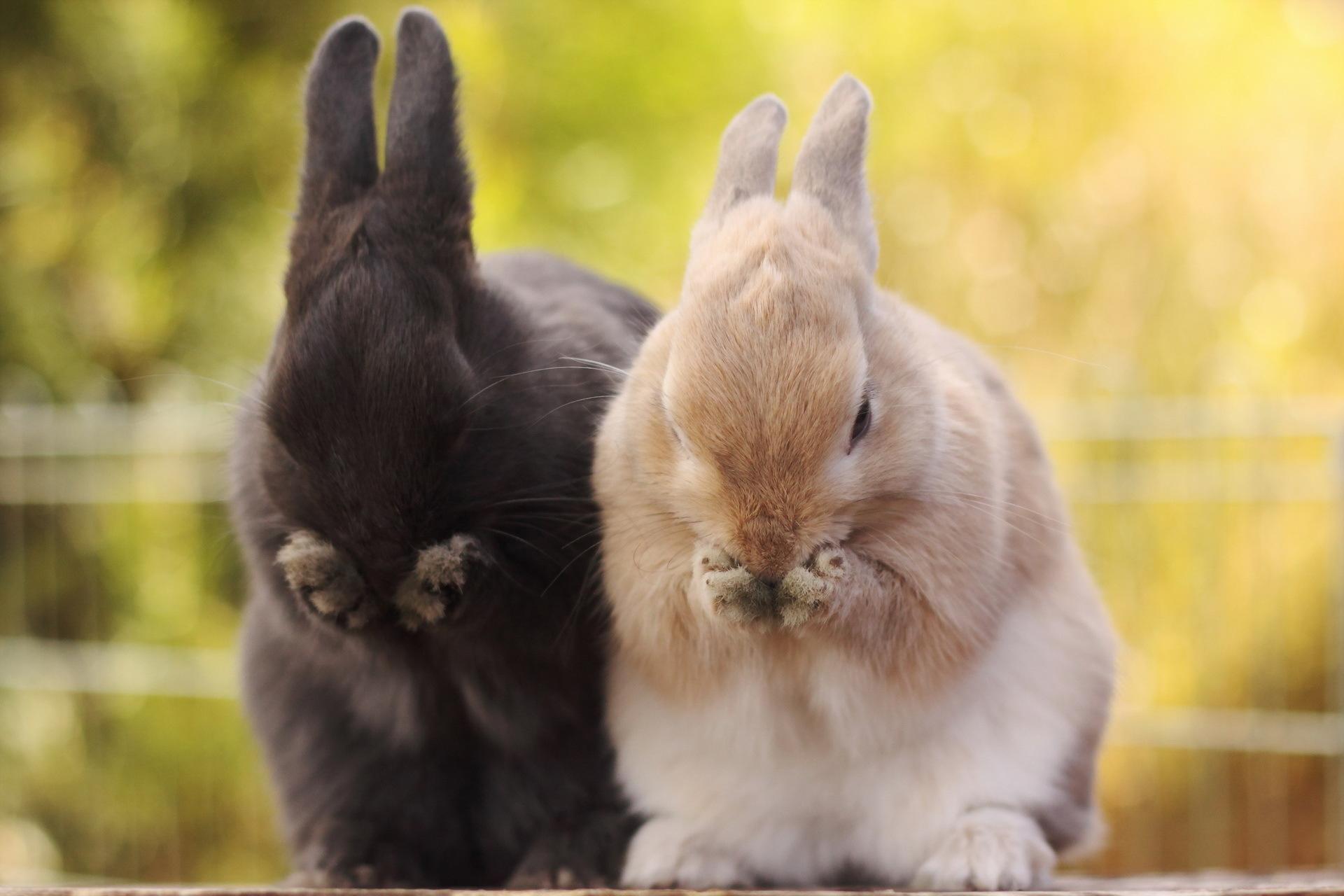 Rabbit Wallpaper Cool Photos