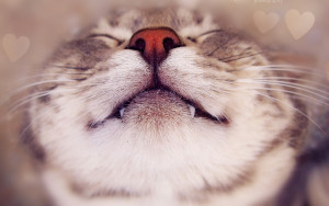 Sleepping Cute Cats Wallpapers