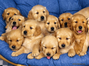 Sweet Puppies Wallpaper 1600x1200