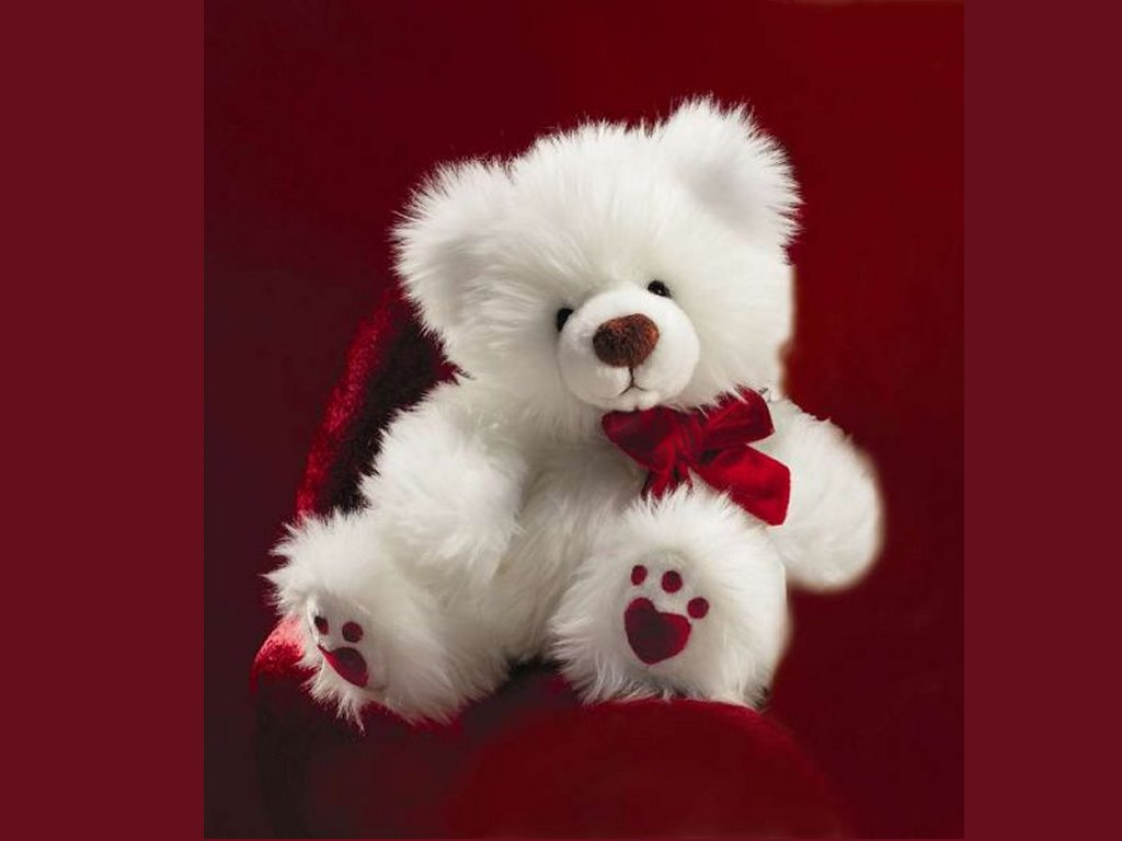 Sweet Teddy Bear White Wallpaper