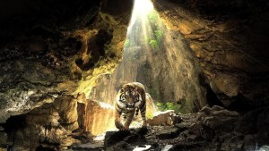 Tiger Wallpaper Free Downloads