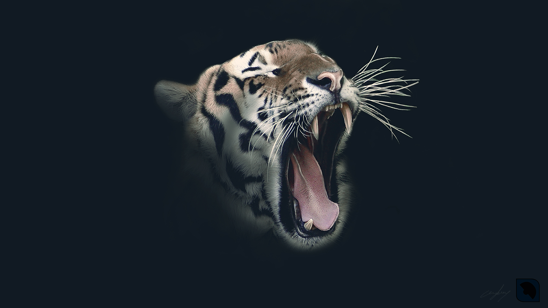 Tiger Wallpaper High Definition