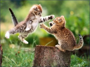 Two Cats Play Wallpaper